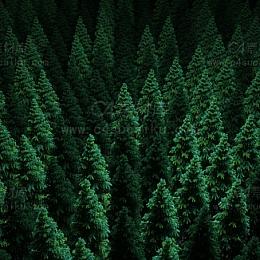 克隆树木植物场景