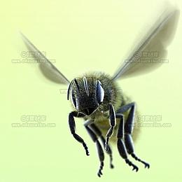C4素材库-蜜蜂高精C4D模型(带绑定)