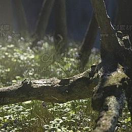 C4素材网-写实森林场景渲染C4D工程by伍玖
