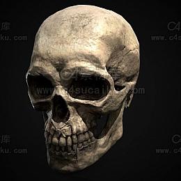 C4素材网-骷髅头C4D模型