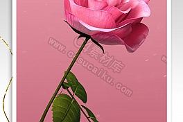 C4素材网-玫瑰花动画C4D工程