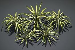 C4素材网-吊兰植物模型