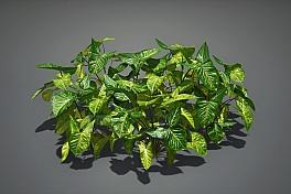C4素材网-合果芋植物模型