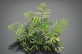 C4素材网-凤尾竹植物模型