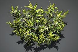 C4素材网-百合竹植物模型