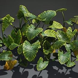 C4素材网-海芋植物模型