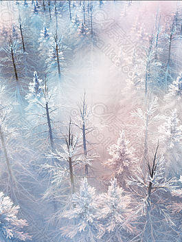 C4素材网-C4D工程-vivo s5 白色树林森林场景